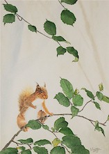 Red Squirrel with Hazel
